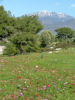 Ancient site of Xanthos, March
